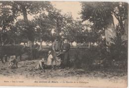 15 - MAURS - Aux Environs De Maurs - La Récolte De La Châtaigne - Autres Communes
