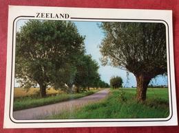 Nederland. Pays-Bas. Holland. Zeeland - Bomen