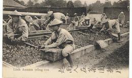 Annamites Au Travail Dans Les Jardins De Versailles - Guerre 1914-18