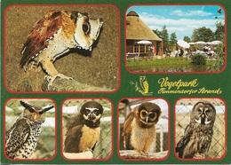 Chouette - Vogelpark Und Eulengarten - 5 Sortes De Chouettes Différentes - Cpm - Pas écrite - - Uccelli