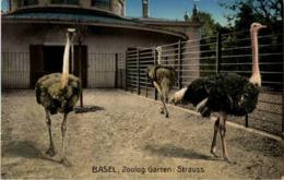 Basel - Zoo - Strauss - Pájaros