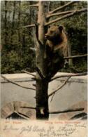 Basel - Zoo - Bear - Osos