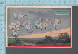 """CPA -Language Of Flowers , Lily, """" PEACE""""  - Cover Lisbon  1910 N.H. With USA Stamp - Fleurs"""