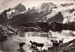 Dep 05 , Cpsm La Grave , Plateau D'En-Paris , Le Lac Lérié , La Meije , Le Rateau Et Le Glacier De Lans   (D9.053) - Francia