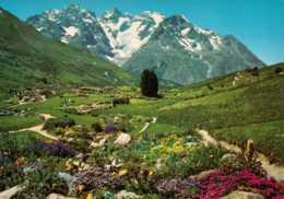 Dep 05 , Cpm Le Jardin Alpin Au Col Du Lautaret Et Le Massif De La Meije , 05 PE 14  (D9.057) - Francia