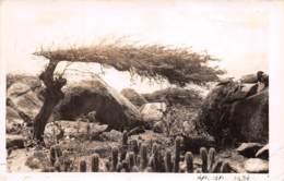 Aruba / Belle Oblitération - 11 - Défaut - Aruba
