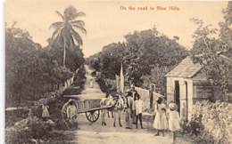 Bahamas / 07 - On The Road To Blue Hills - Bahamas