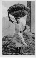 Barbados / 14 - Native On Sugar Factory - Barbades