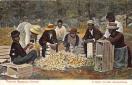 Bermuda / 13 - Packing Bermuda Onions - Bermudes
