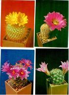 Cactusses. 24 Postcards In The Folder - Cactus