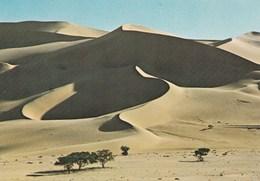 REPUBLIQUE DU NIGER DUNES DU TEMET (dil421) - Niger