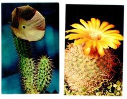 Cactusses. 16 Postcards In The Folder - Cactus