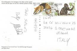 Belize 2002 Caye Caulker Howler Monkey Anteater Viewcard - Belize (1973-...)