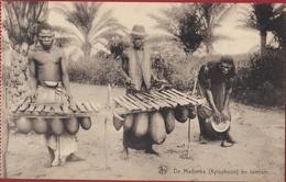 Belgisch Congo Belge Kasai Madimba Tamtam Musiciens Anemba Instrument Ethnique Ethnic Tribe Tribu Afrique Africa - Congo Belga - Otros