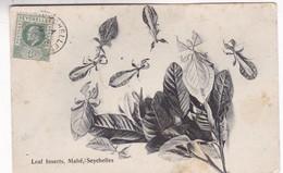 LEAF INSECTS, MAHE. SEYCHELLES. CIRCULEE 1908 A FRANCE. S.S. OHASHI PHOTO-RARE-BLEUP - Seychellen