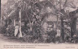 Le Nouveau Kiosque, Jardin Botanique Des Pamplemousses (1909) - Maurice