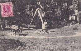SUGAR CANE MILL, MAHE. BULL. SEYCHELLES. S.S. OHASHI PHOTO CIRCULEE 1908-RARE-BLEUP - Seychellen
