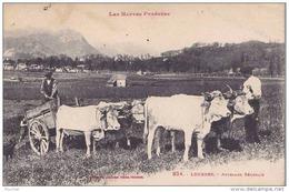 A21 - 65) LOURDES - ATTELAGE BÉARNAIS - (BOEUFS - 2 SCANS) - Lourdes