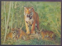 3D Plastic POSTCARD - Lion, Animals - Cartes Postales