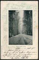 De Steeg - Middachter-Allee 1903 - Nederland