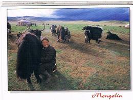 MONGOLIE  CAMPEMENT - Mongolie