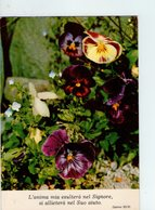 U4027 Cartolina 1979 CITAZIONE, CITATION, CITIZEN + Fiori Fleurs Flowers Flores - Filosofia & Pensatori