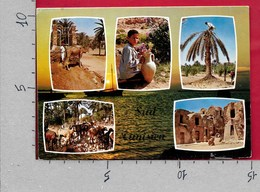 CARTOLINA VG TUNISIA - Vue Pittoresques Du Sud Tunisien - 10 X 15 - ANN. 1970 - Tunisia