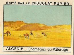 Image Chocolat Pupier Algérie Chameaux Au Pâturage N°26 - Vieux Papiers