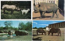 4 CP Hippopotames  - Rhinoceros - Scènes Diverses 110300) - Ippopotami