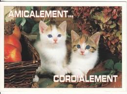 CPM  Thème Animaux Chat Cat Réf 2208 - Cats