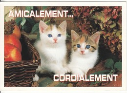 CPM  Thème Animaux Chat Cat Réf 2208 - Chats