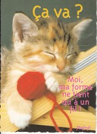 CPM  Thème Animaux Chat Avec Pelote De Laine Cat Réf 2209 - Gatos