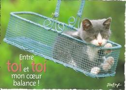 CPM  Thème Animaux Chat Dans Un Panier  Cat Réf 2210 - Gatos