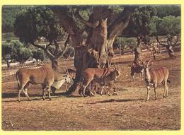 Tematica - Antilopi - Zoosafari Di Fasano - Antilopi  -  Not Used - Cani