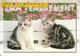 CPM  Thème Animaux Chat Sur Un Banc  Cat Réf 2211 - Gatos