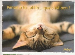 CPM  Thème Animaux Chat  Cat Réf 2217 - Gatos