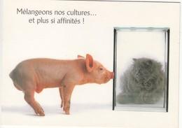 CPM  Thème Animaux Chat Avec Un Cochon Cat Réf 2222 - Gatos