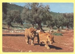 Tematica - Leoni  - Zoosafari Di Fasano - Not Used - Leoni