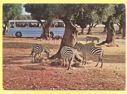 Tematica - Zebra  - Zoosafari - Not Used - Cebras