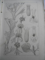 Flore. Atlas Flore Des Environs De Paris. 1845. Coton Et Germain. 500 Figures De Plantes Sous Forme De Gravures - Livres, BD, Revues