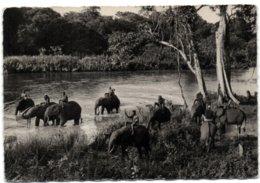 Stanelyville - Eléphants Au Camp Andudu - Belgisch-Congo - Varia