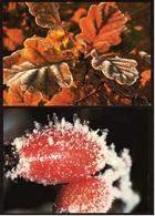 2 X Rauhreif : Eichenlaub / Hagebutte  -  DJH Ca. 1982 / 1987  (9256) - Botanik