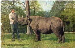 Rhinocéros - Two Horned African Rhinocéros New York Zoological Park (110302) - Rhinocéros