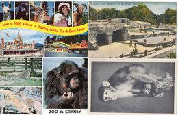 4 CP - Monkey Island - Singe Capucin - Zoo De Granby - Sterling Alaska  - Scènes Diverses  (110308) - Singes