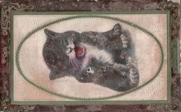 5360A     CHAT   ECRITE 1feuillet - Cats