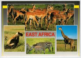 EAST  AFRICA       WILDLIFE   SAFARI      (VIAGGIATA) - Kenia