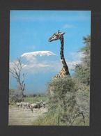 ANIMAUX - ANIMALS - GIRAFE MAASAI GIRAFFE AND KILIMANJARO - PHOTO FERRARI - Girafes