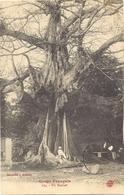CPA Congo Français Un Baobab, Collection J. Audema 174, Cachet 1913 - Congo Français - Autres