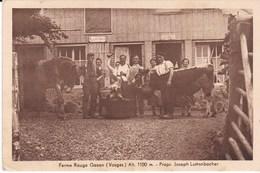88 Saint Maurice Ferme Rouge Gazon Joseph Luttenbacher - Remiremont