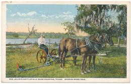TX - San Jacinto Battlefield, Spanish Moss Tree - Houston